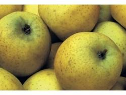Pomme Chanteclerc Bio